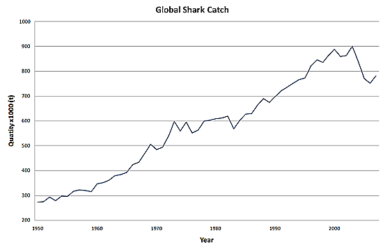 Global Shark Catch