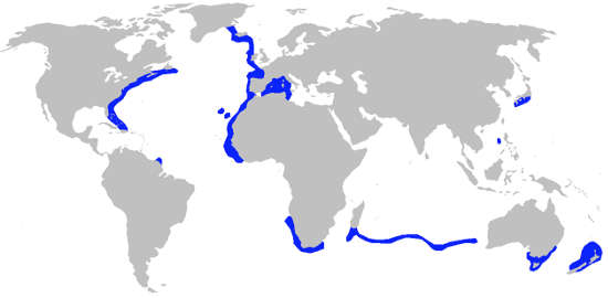 Portuguese Dogfish Shark Habitat Map