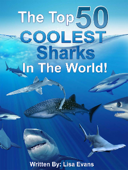 The Top 50 COOLEST Sharks In The World