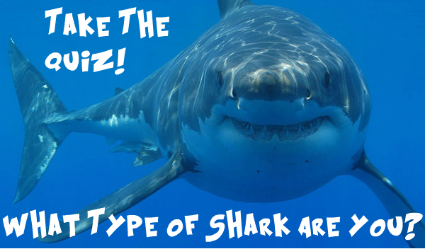 A Shark Quiz To See Which Type Of Sharks You Are - Shark Sider