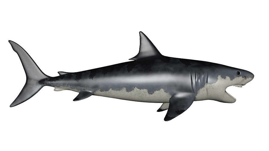 What Do We Know About Megalodon Sharks?