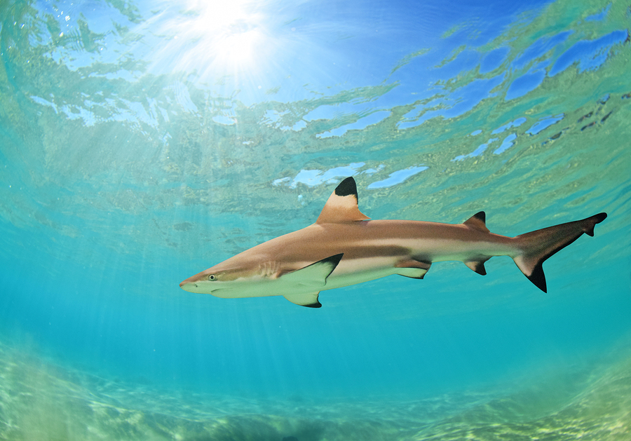 Your next vacation might be where sharks live for Plenty of fish boise