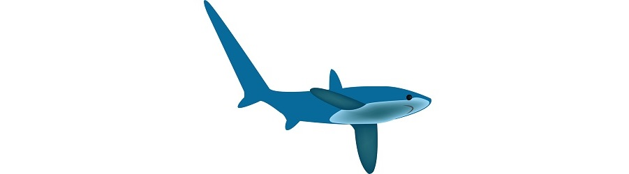 10 Incredible Facts About Thresher Sharks