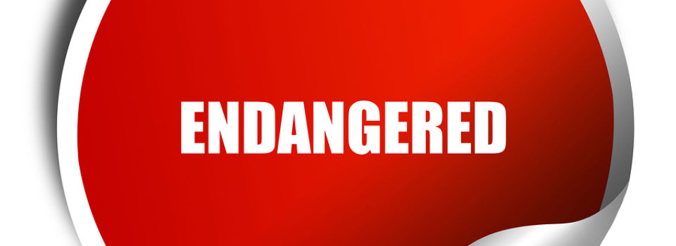Are Sharks Endangered? 10 Sharks That Are Critically Endangered